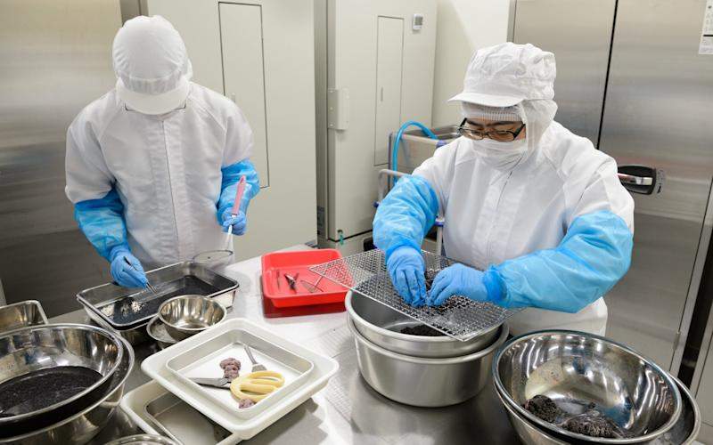Sturgeon eggs being processed for caviar in Japan - Akio Kon