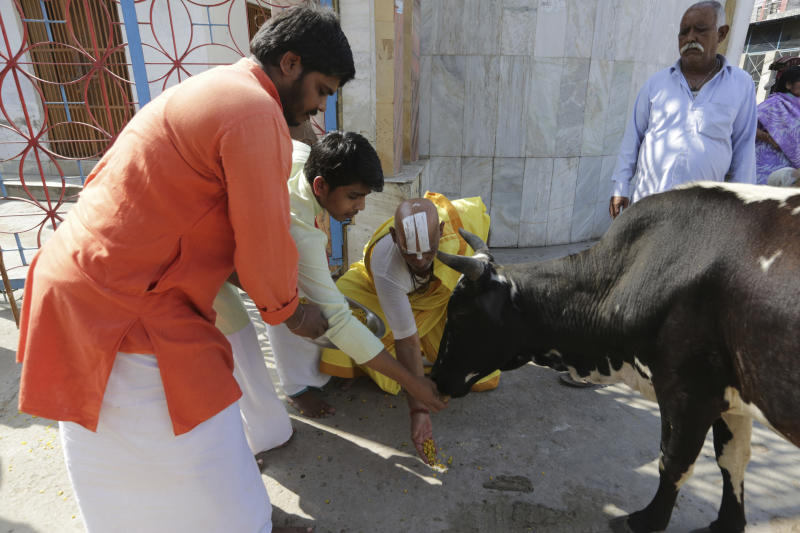 Hindus feed a cow as they celebrate the verdict in a decades-old land title dispute between Muslims and Hindus, in Ayodhya, India, Saturday, Nov. 9, 2019. India's Supreme Court on Saturday ruled in favor of a Hindu temple on a disputed religious ground and ordered that alternative land be given to Muslims to build a mosque. The dispute over land ownership has been one of the country's most contentious issues. (AP Photo/Rajesh Kumar Singh)