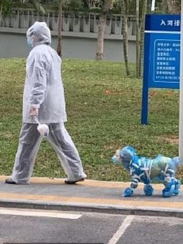 Hewan memakai pelindung untuk cegah virus corona (Sumber: Weibo)
