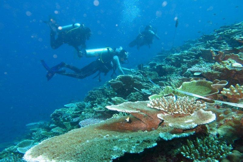 Kelola terumbu karang, KKP himpun data di wilayah Kalimantan