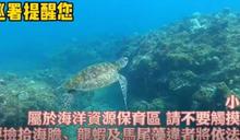 海龜海底悠游太可愛 摸一下荷包會噴30萬