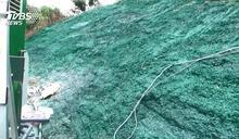 挖地噴漆躲查? 衛星揪出偽裝「綠山坡」