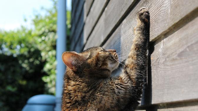 ilustrasi Kucing (Sumber: Pixabay)
