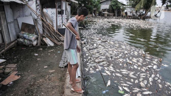 Warga saat membersihkan bangkai ikan Mujair yang memenuhi di depan rumahnya di Lio, Depok, Jawa Barat, Kamis (20/8/2020). Sejak dua hari terakhir ribuan ekor ikan Mujair mati dan memenuhi Situ Rawa Besar yang menurut warga setempat disebabkan oleh faktor cuaca. (merdeka.com/Iqbal S. Nugroho)