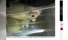 德國警破獲動物走私案 公寓「冰箱內」尋獲4隻馬爾濟斯