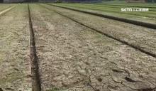 56年來最乾旱 嘉南一期稻作恐停耕