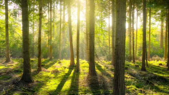 Aroma Alam yang Mencerminkan Kepribadianmu