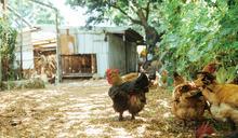來桃園擁抱大自然 農事體驗新風貌