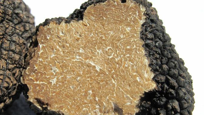 Ilustrasi jamur truffle. (dok. Pixabay.com/WikiImages)
