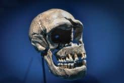 DNA dari Neanderthal dapat membuat Covid semakin parah