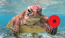 2020《搞笑野生動物攝影獎》 冠軍居然是海龜「做這事」?