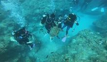 一男一女潛水客餵食海龜 函送屏檢偵辦