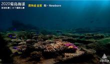2020菊島海漾水下攝影比賽結果出爐