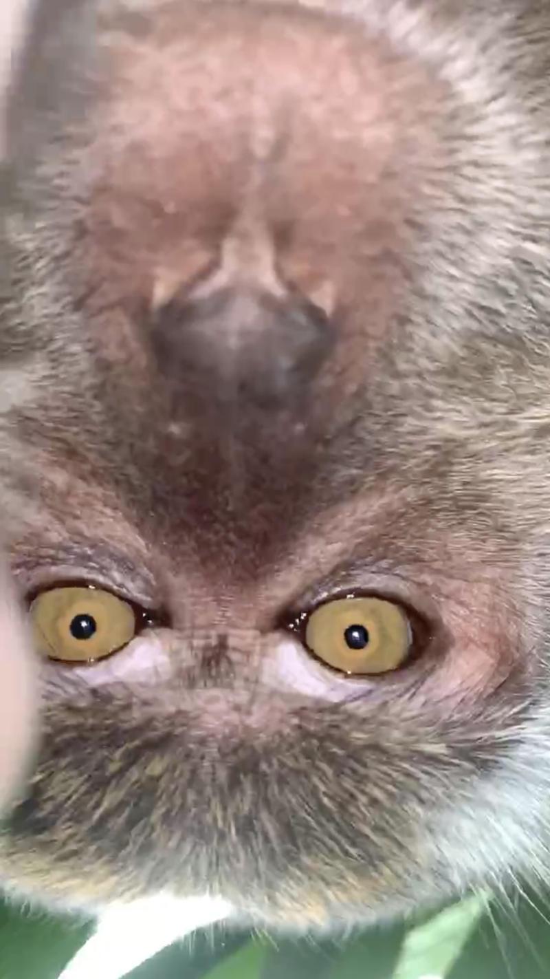 Malaysia Monkey Selfie