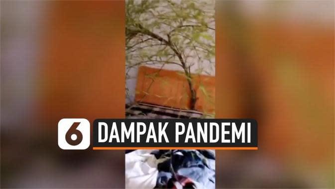 VIDEO: Tak Pulang 4 Bulan, Pohon Bambu Tumbuh di Kamar Pria Ini