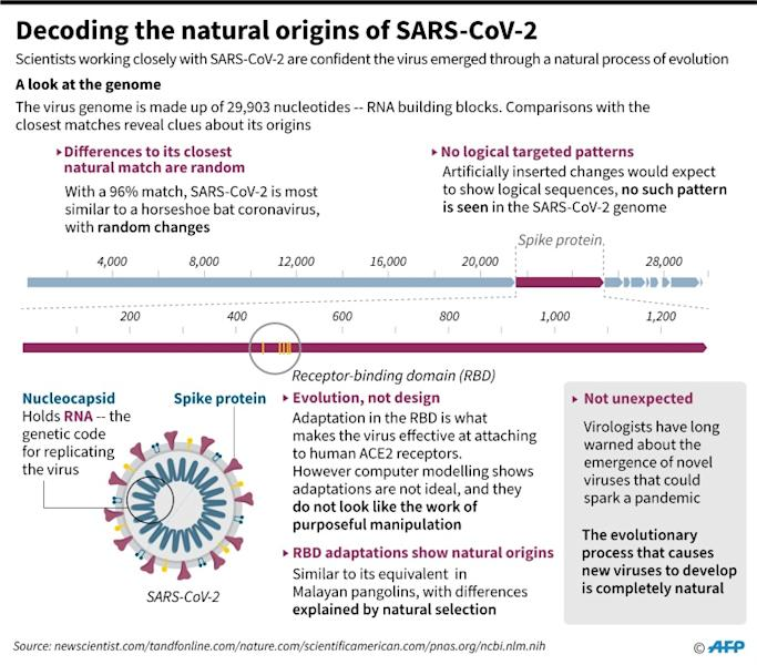 Graphic on what gene sequencing can reveal about the origins of the virus