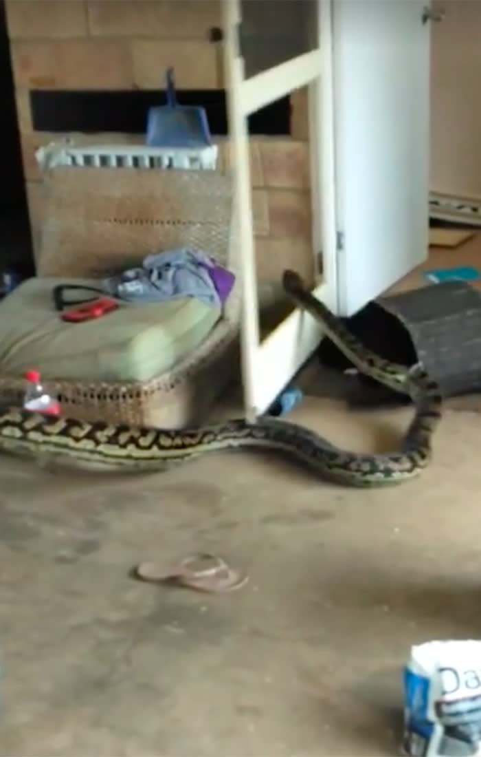 Scrub python removed from Mission Beach home