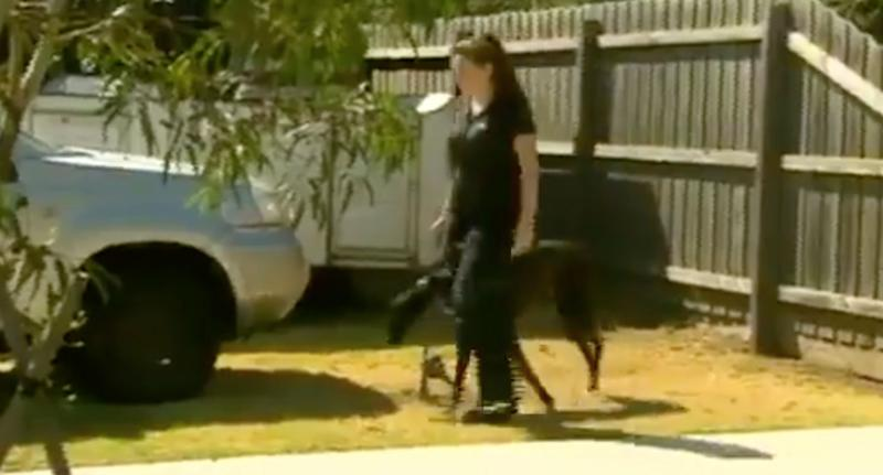 Melbourne mum saves girl, 1, from greyhound dog attack