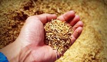 水患、蝗蟲釀糧食危機 中國將立法制止餐飲浪費
