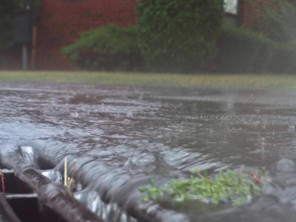 溫度濕度影響傳播 台灣濕熱氣候恐讓病媒蚊不斷孳生