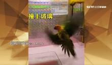 活體鸚鵡娃娃機 最重可罰7.5萬元