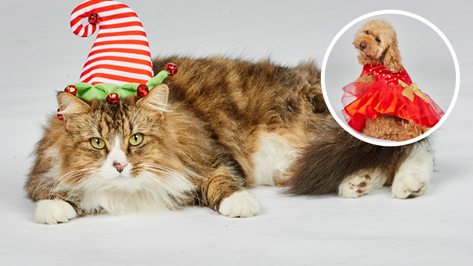 <p>Treat your pet with something special this festive season.<br />Photo: Petbarn </p>