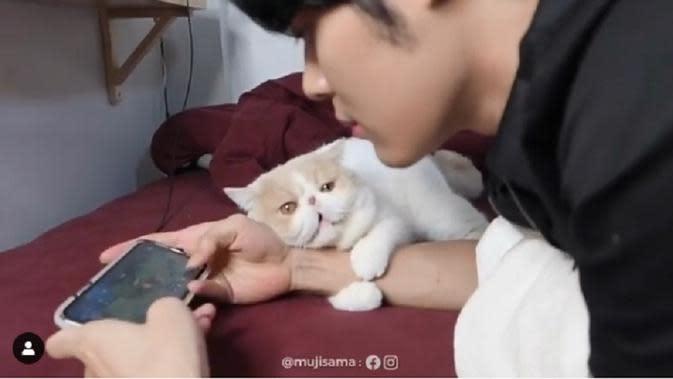 Seekor kucing tampak melarang majikannya bermain game
