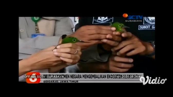 VIDEO: BKSDA Jawa Timur Lepas 178 Burung Dilindungi ke Habitatnya di Kalimantan