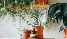 防失智又紓解身心!「療癒園藝風」正夯 安頓你的五感