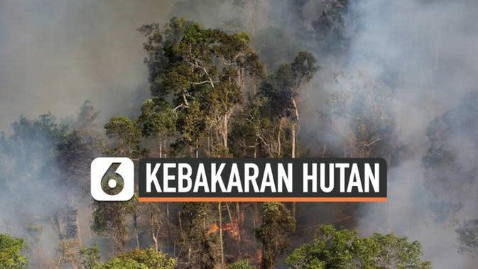 VIDEO: Leonardo DiCaprio Bantah Jadi Donatur WWF