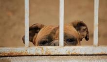 【犯罪心理學S01E09】犯罪之後,矯正之前:刑罰與監獄的現在進行式