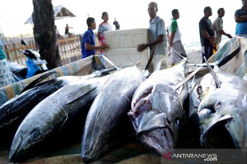 Gorontalo ekspor 93,5 ton tuna ke Jepang