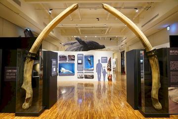 「鯨驗值-鯨骨解密特展」即日起於台博館一樓東展間展出,透過鯨骨標本揭露的秘密,引領觀眾認識台灣鯨豚保育的轉變。(台博館提供)