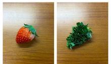 草莓放到發芽綠一片!變身惡魔果實