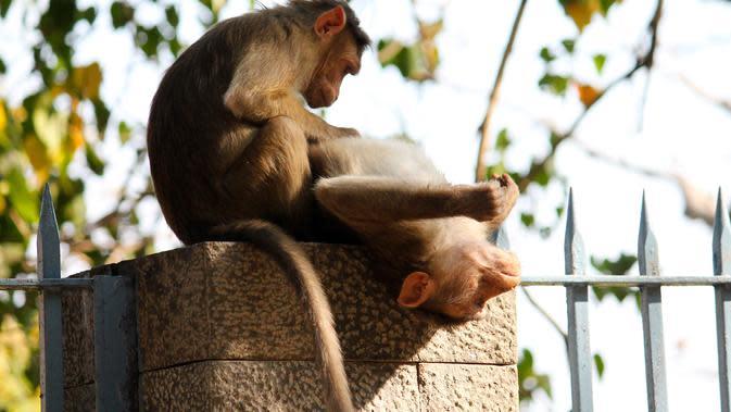 Ilustrasi Hewan Kebun Binatang Mumbai (Foto: mirkosajkov/pixabay.com)