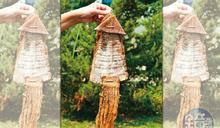 土裡也能長出山魷魚!雲林古坑的黃金傳奇
