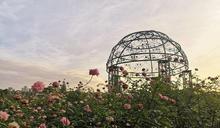 秋天感受浪漫臺北玫瑰園約會趣 周邊景點推薦
