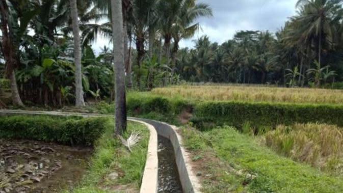 Kementan Gelar Kegiatan RJIT Guna Dukung Pertanian di Badung