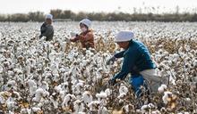 美國棉花禁令下 新疆對美出口依舊增長