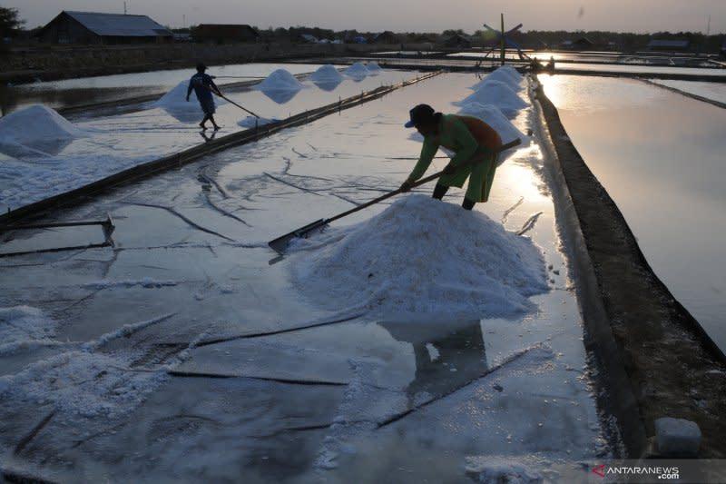 Mencari titik temu produktivitas garam nasional dan kebutuhan industri