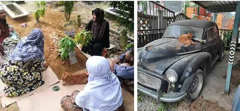 Nana has been visiting its owner's grave for the past two years and would sit on his old car. — Picture courtesy of Hazlynn Nozi