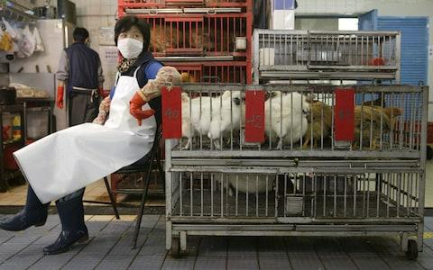 A chicken vendor taking a rest at her stall in the Hau Wong Road wet market in Kowloon City. About 6,000 poultry farmers and dealers will be provided with free human influenza vaccines starting from February 02 as Hong Kong braces for a possible outbreak - Credit: South China Morning Post