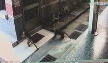 疑違法飼養 獼猴出沒雲林抽水站