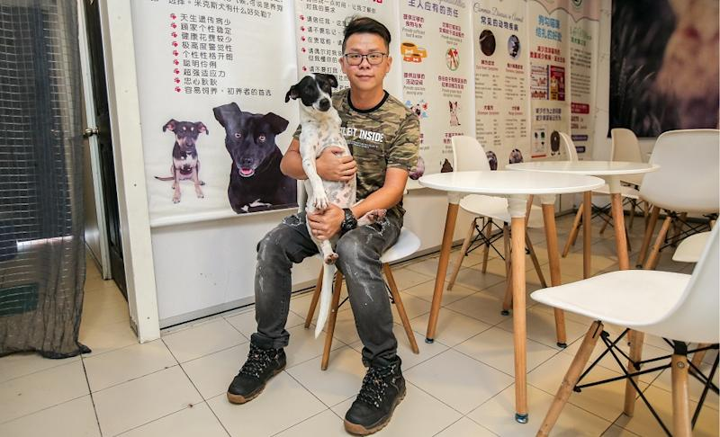 Mutts and Mittens president Chong Choon Kit said the centre was to ensure more strays get adopted rather than putting them back into the streets. ― Pictures by Farhan Najib
