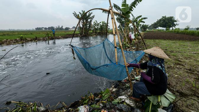 Warga mencari ikan betik menggunakan perangkap ikan tradisional atau anco di Kali Doser, Desa Wates, Bekasi, Jawa Barat, Selasa (21/1/2020). Selain untuk makan, ikan betik yang didapat warga juga digunakan untuk membuat terasi. (merdeka.com/Imam Buhori)