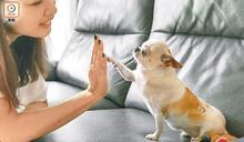 失業率升連帶棄養寵物增加 愛協推食物支援助困
