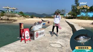 【動物AR】很美味?藍鰭吞拿魚卻因饕客走上滅絕之路