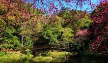 臺北國際旅展林務局推出「國家森林館」 嚴選34條深度森林遊程