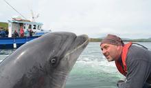 「史上最孤獨的海豚」失蹤!船長:被迫與最愛的人類分開,牠才離家出走