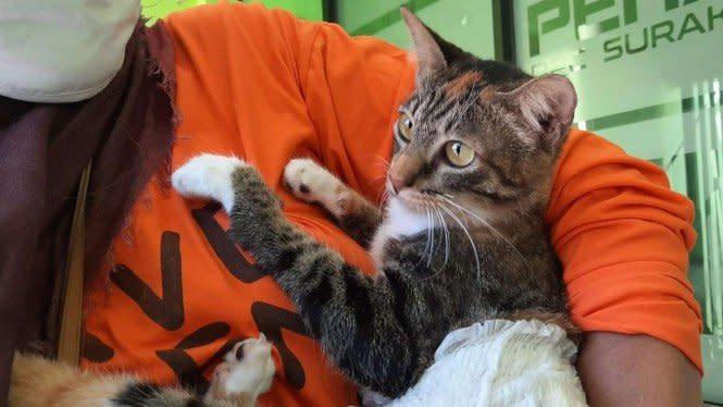 Penembak Kucing di Solo Raya Akhirnya Dilaporkan ke Polisi